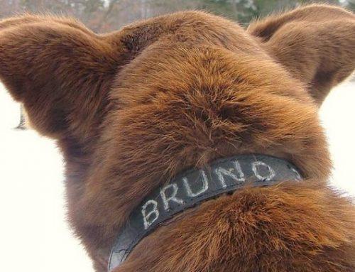 El perro viajero que recorre 6,5 kilómetros cada día para visitar a los habitantes de Longville