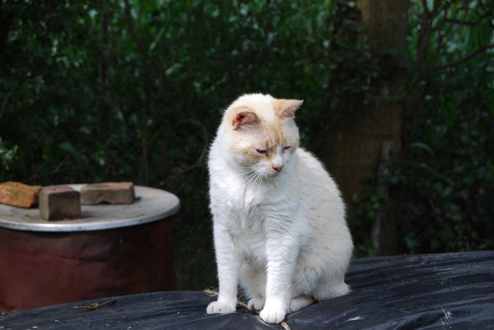 cat-1101747_960_720
