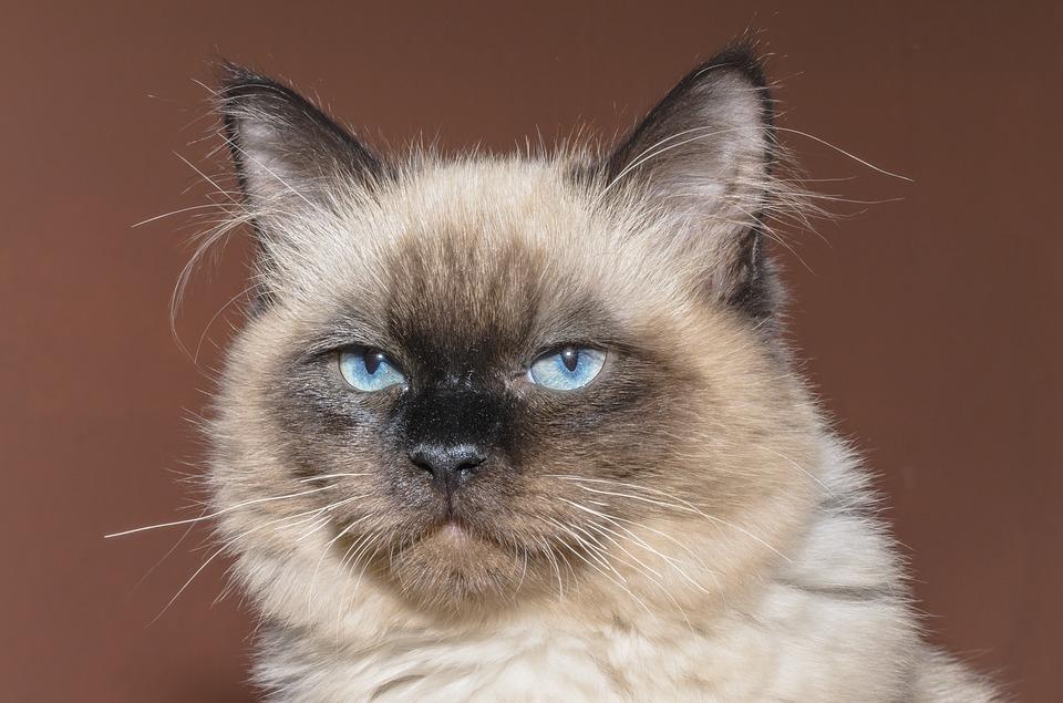cat-1613085_960_720