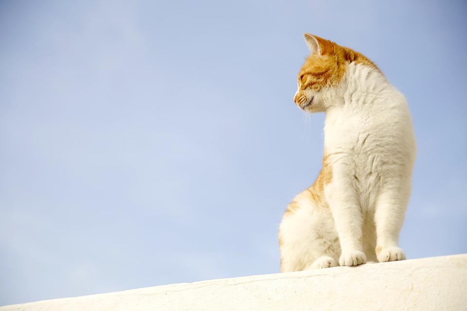 cat-506126_960_720
