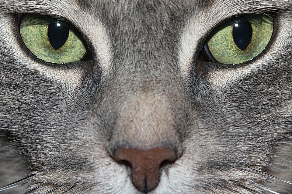 cat-620282_960_720