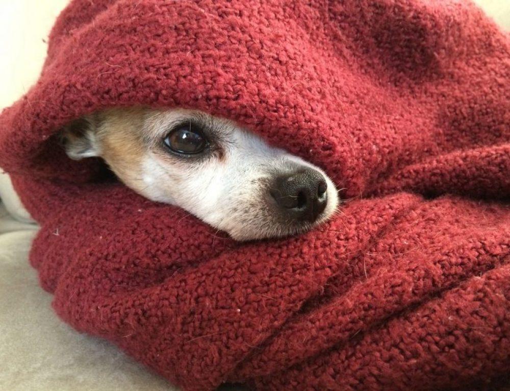 Cómo saber si mi perro tiene frío