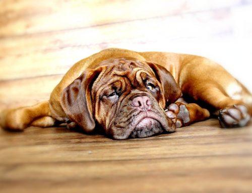 4 razones por las que adoptar una mascota