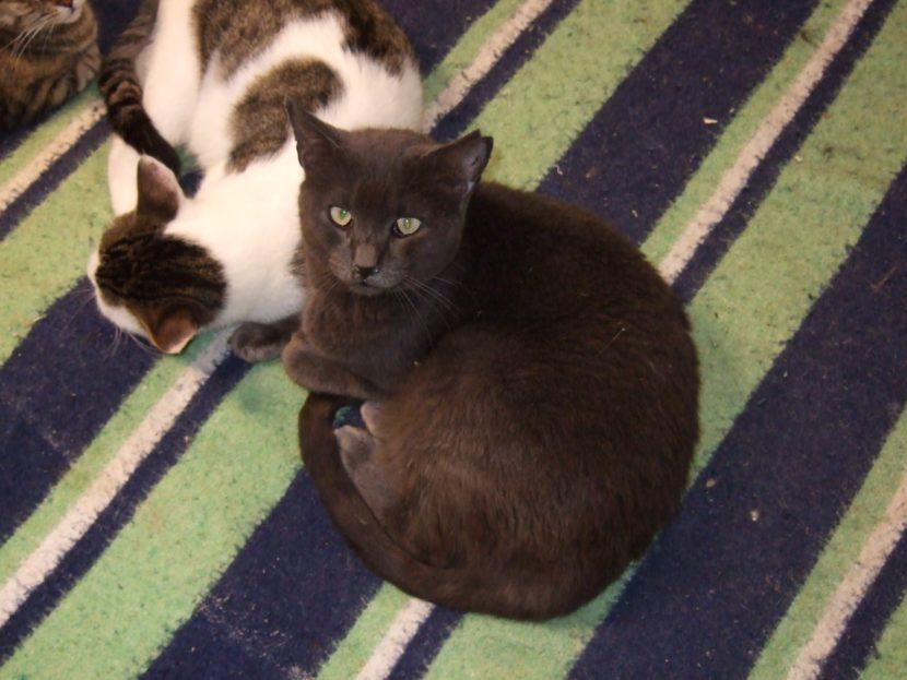gato-con-marca-en-la-oreja-830x623