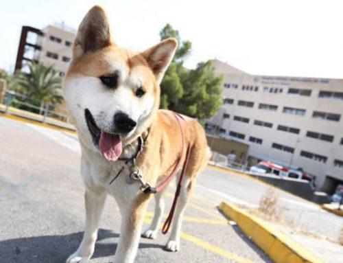 Maya, la perra que esperó a su dueña en el hospital