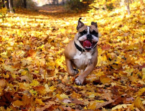 Perros en otoño, cuidados básicos