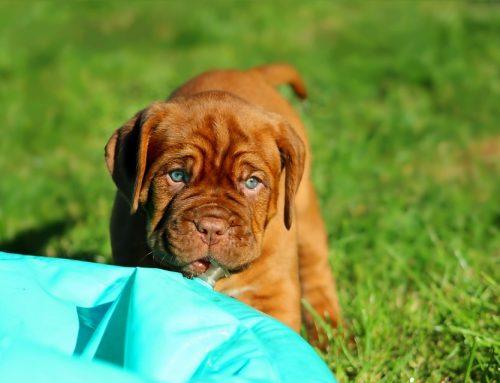 Tipos de casetas para perros