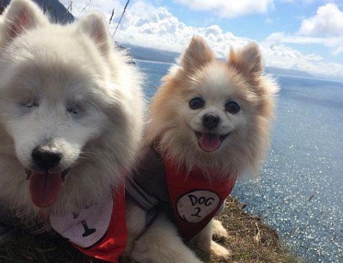 La bonita amistad entre un perro ciego y un cachorro guía