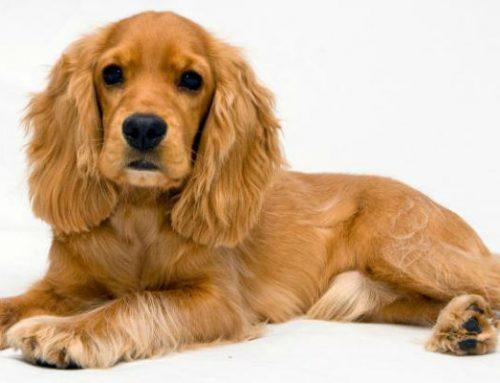 Falsos mitos acerca de los perros