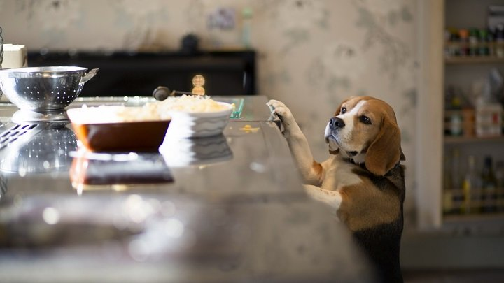 alimentos-humanos-perros