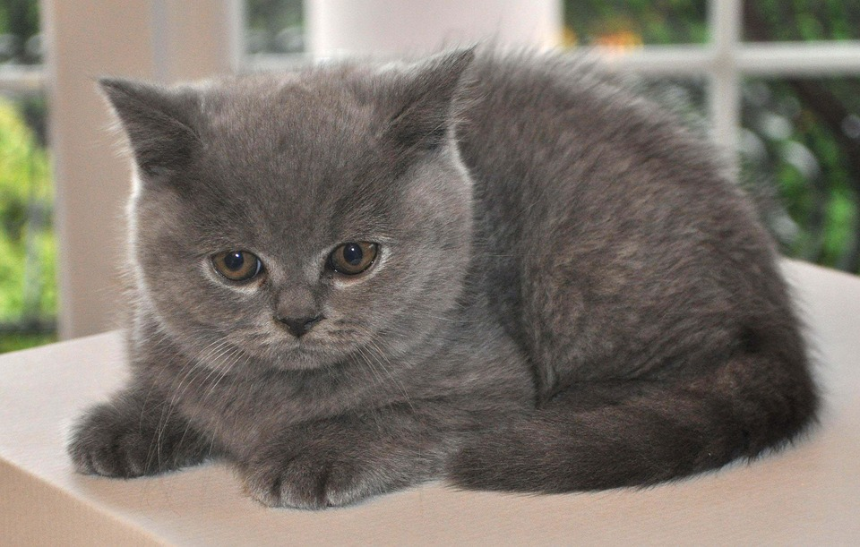 cat-1248019_960_720