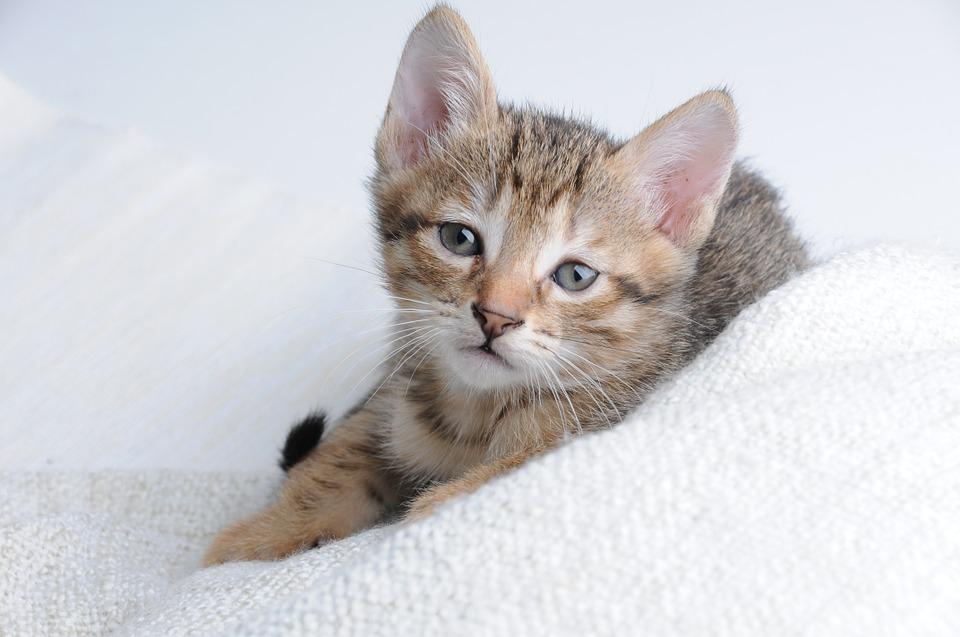 cat-875809_960_720