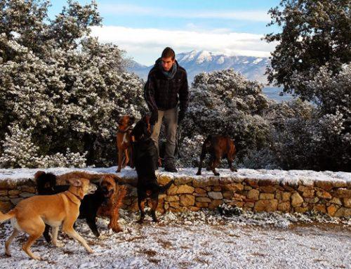Cómo elegir un buen cuidador canino