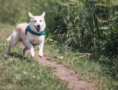 Las razas de perros más activas