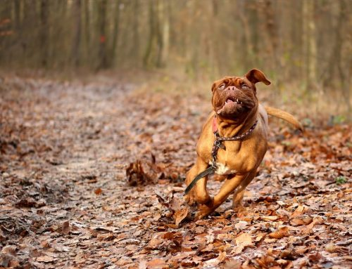 Qué hacer si mi perro se pierde
