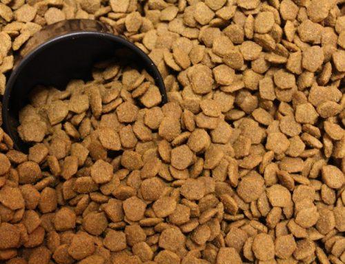 Qué puede comer un perro con gastroenteritis