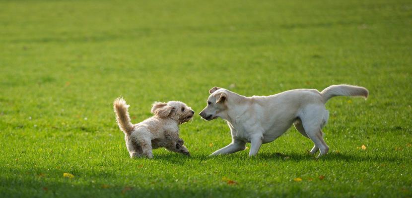 Por qué adoptar a dos perros, o más