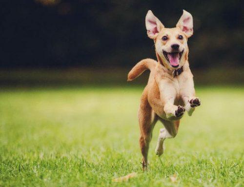 ¿Mi perro es feliz? Cómo averiguarlo