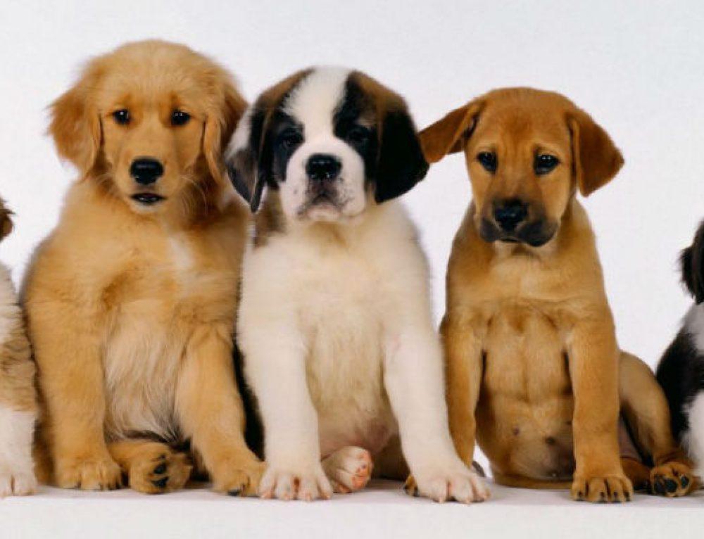 La socialización del cachorro