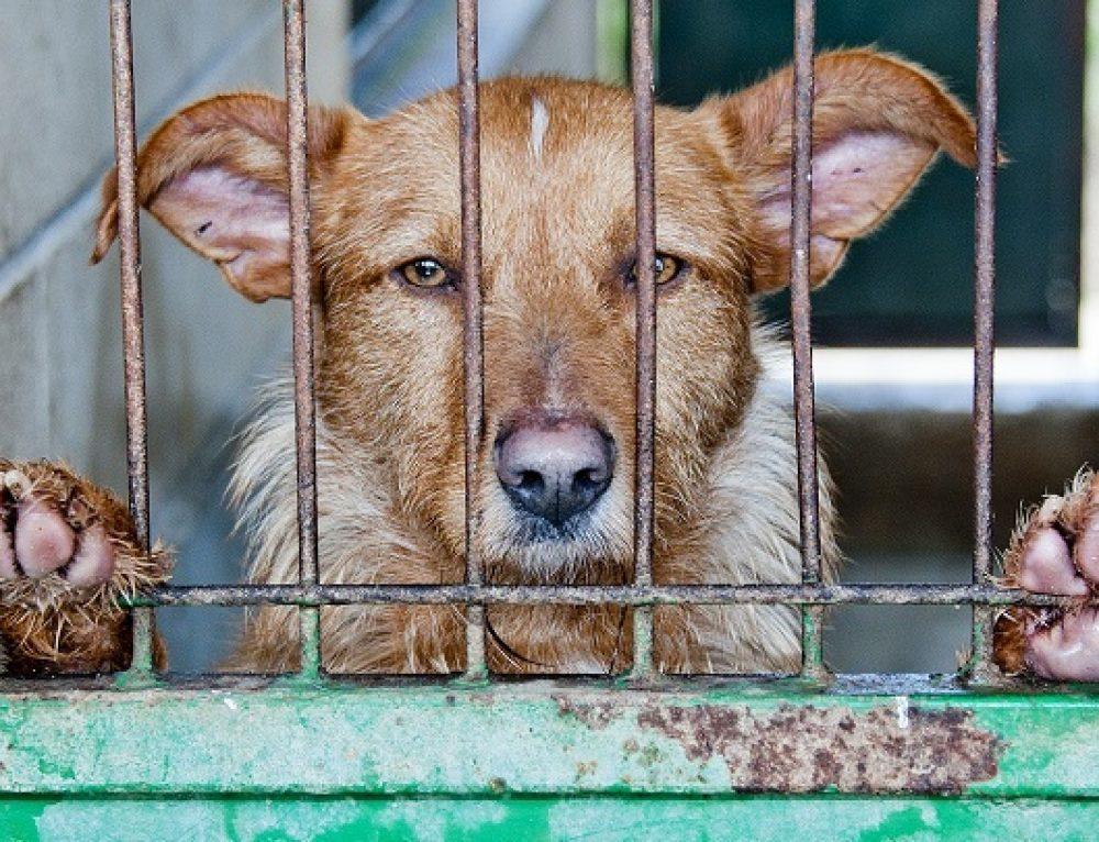 Medidas contra el abandono animal