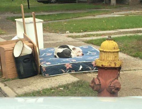 Un perro pasa un mes esperando a sus dueños en el lugar donde le abandonaron