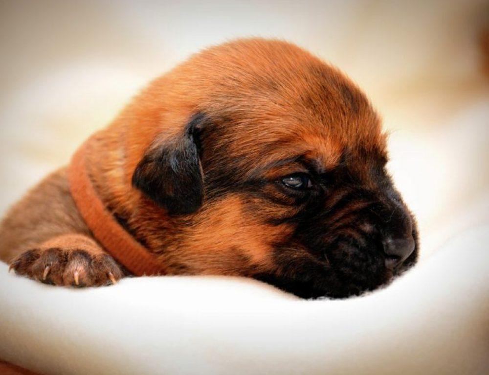 Cómo cuidar a un perro recién nacido