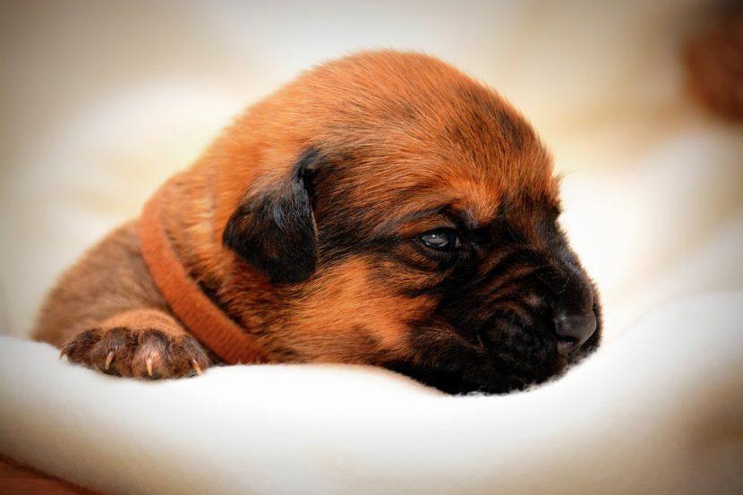 cachorro-bebe-830x553