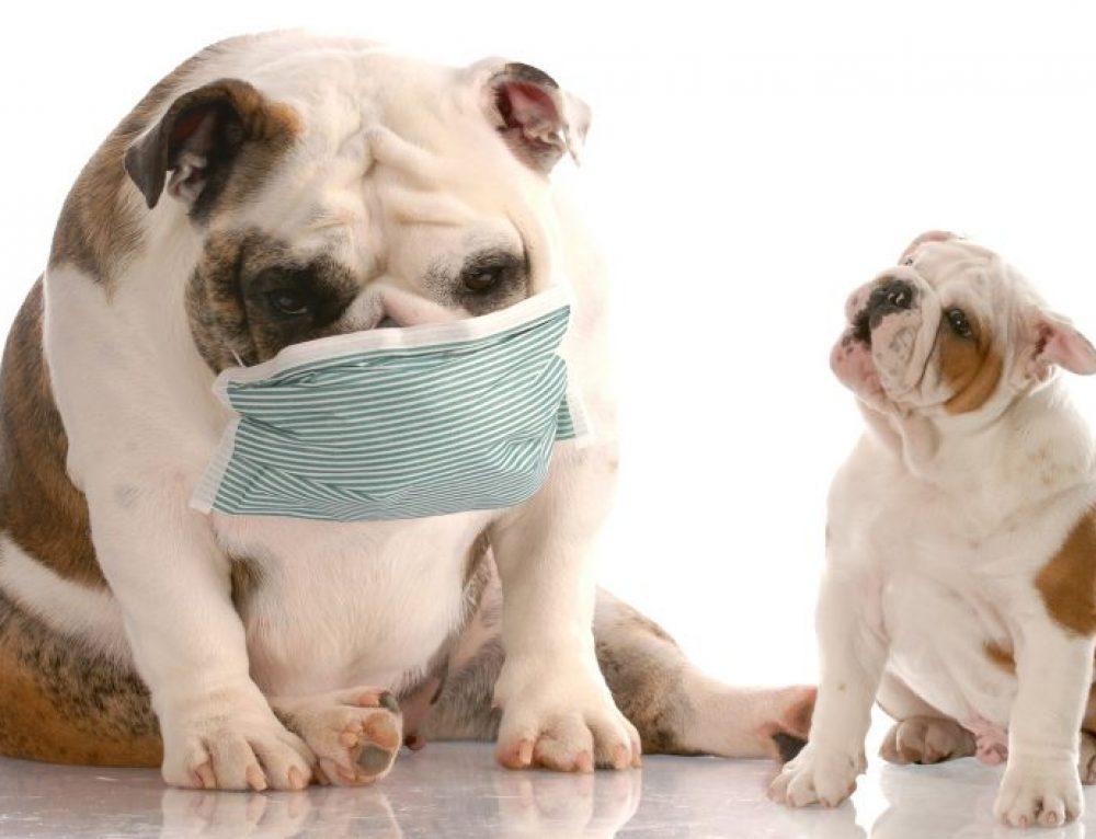 Cómo cuidar a un perro con alergia