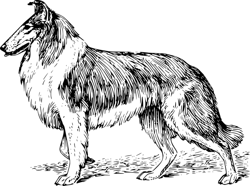 dibujo-de-border-830x617