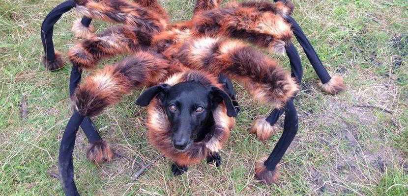 Cómo disfrazar al perro en Halloween