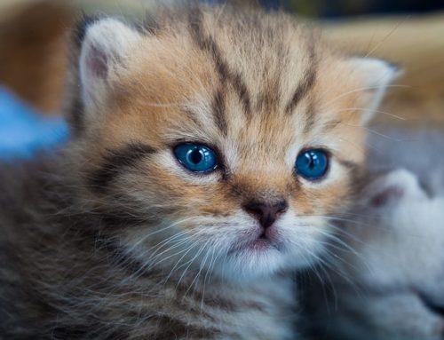 Por qué tiembla mi gatito