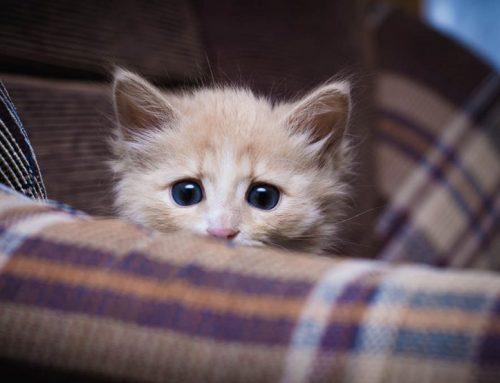 Cómo proteger al gato de los fuegos artificiales
