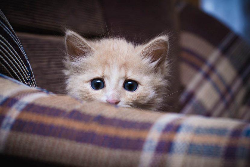 gato-asustado-830x554