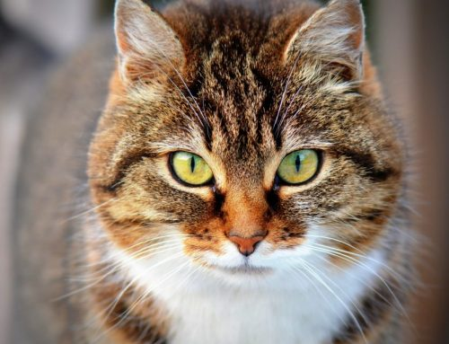 ¿Cómo conquistaron el mundo los gatos?