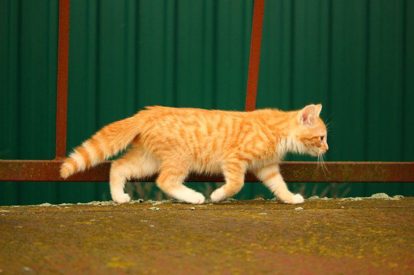 Por qué se van los gatos