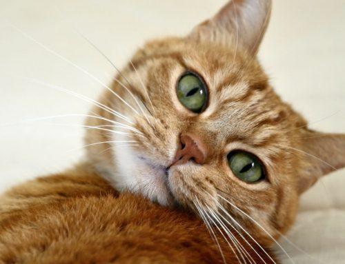 ¿Cómo es el comportamiento de los gatos?