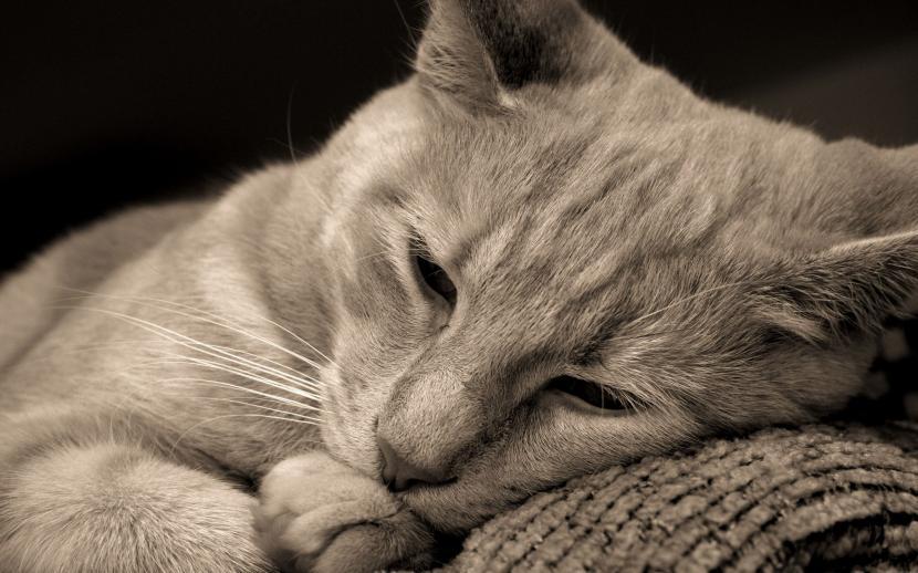 gato_triste