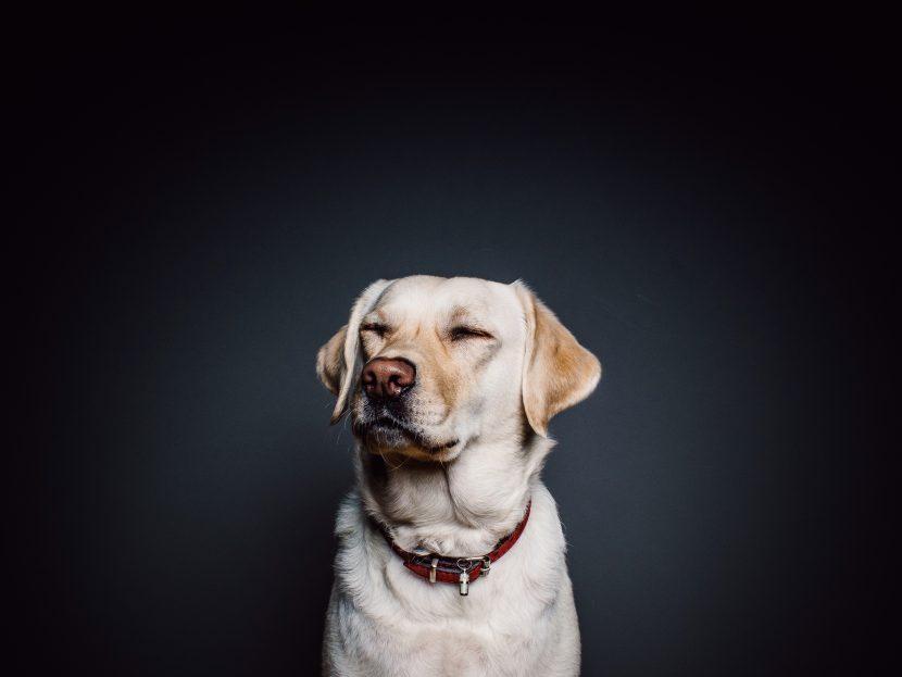 Por qué mi perro se revuelca en sus heces