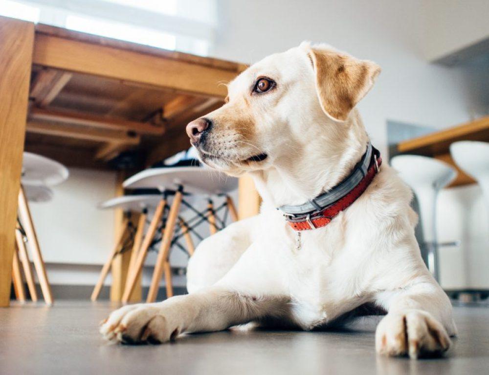 Cómo cuidar a mi perro sordo