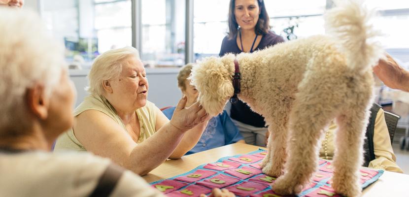 perros-de-terapia