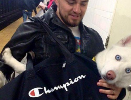 Los perros bolsa en el metro de Nueva York