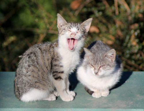 Cómo ayudar a los gatos callejeros