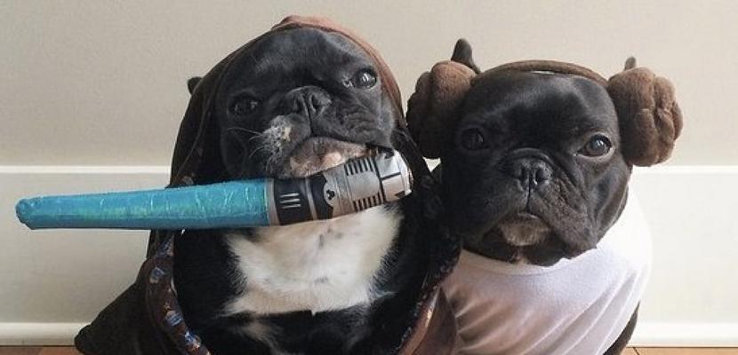 disfraces-de-perro-halloween