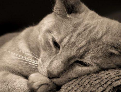Por qué mi gato está triste