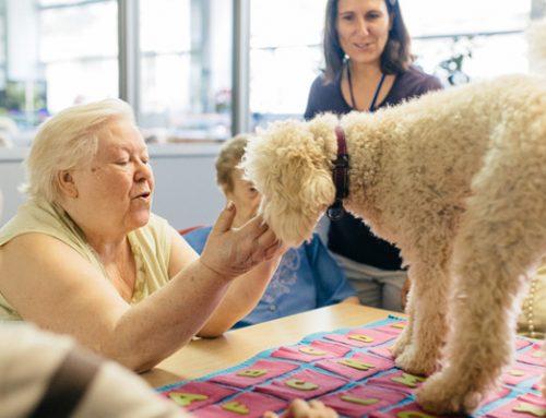Perros de terapia para la tercera edad