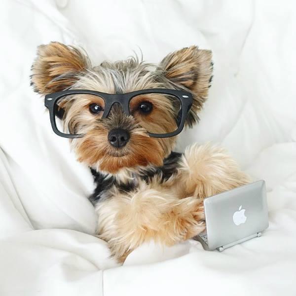 Los perros tienen la inteligencia de un niño de 2 años