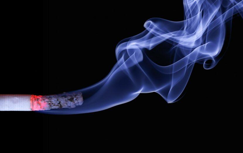 El humo del tabaco afecta a los gatos