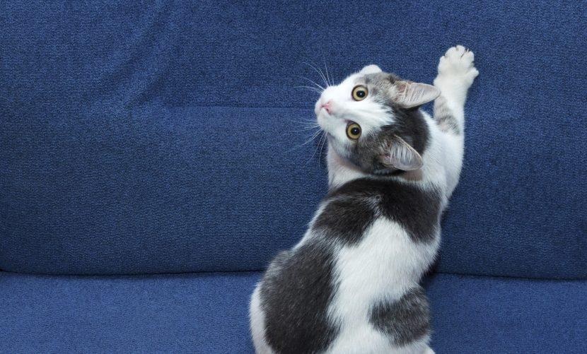 Por qué araña mi gato