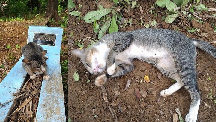 La gata que lleva un año durmiendo en la tumba de su dueña