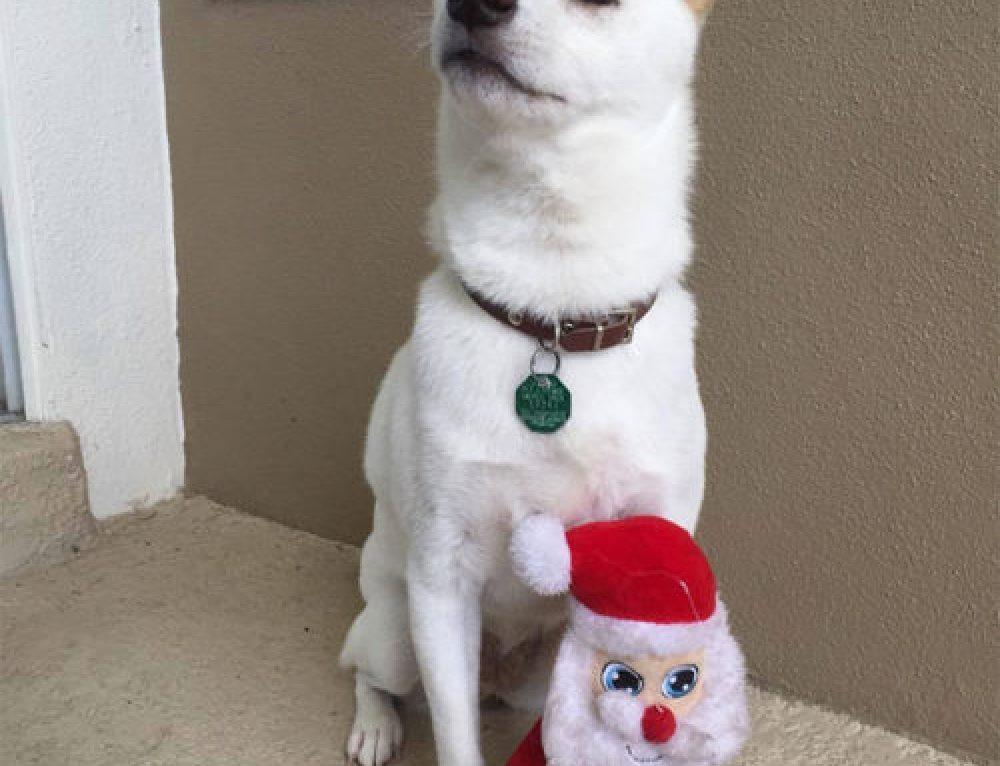 La reacción de un perro cuando conoce a su juguete favorito ¡en persona!